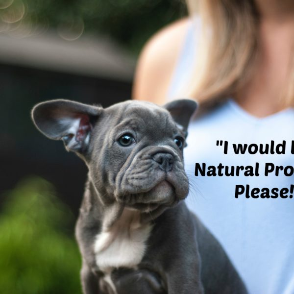 Natural Alternatives in Pet Care- First Line of Defense